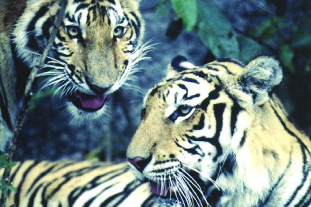 d u00e9couverte de la faune lao